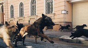 Pera Film - Tales of Tails: Dogs on Screen